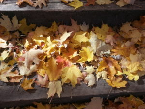 leaves-oct-2014-erin